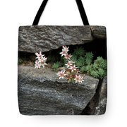 Life On Bare Rock - Pale Pink Succulents On The Wall Tote Bag
