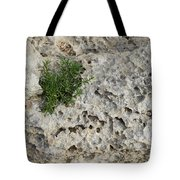 Life On Bare Rock - Pockmarked Limestone And Thyme Tote Bag