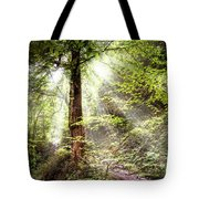 Light Along The Trail Tote Bag
