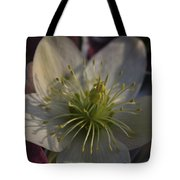 Light And Shadow Hellebore Flower Tote Bag