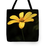 Light From Darkness Tote Bag