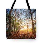 Light In The Cypress Trees II Tote Bag