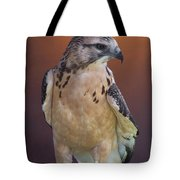Light Morph Immature Swainsons Hawk Tote Bag