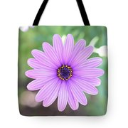 Light Purple Gazania Macro 1  Tote Bag
