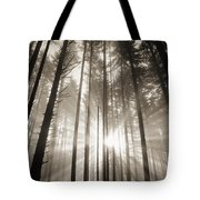 Light Through Forest Tote Bag