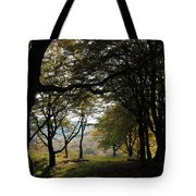 Light Through Woodland Darkness Tote Bag