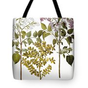 Lilac And Box, 1613 Tote Bag