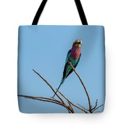 Lilac Breasted Roller 5 Tote Bag