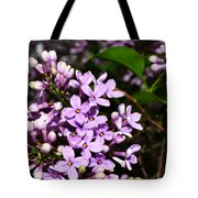 Lilac Bush In Spring Tote Bag