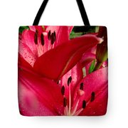 Lilies Of The Oaks Tote Bag
