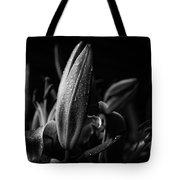 Lily Bud At Night Tote Bag
