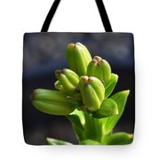 Lily Growth  Tote Bag