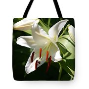 Lily Of White Tote Bag