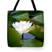 Lily Tries To Be Seen Tote Bag