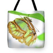 Lime Greens Tote Bag