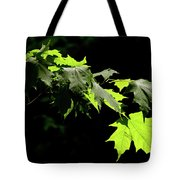 Limelighted Maples Tote Bag