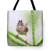 Lincoln's Sparrow Tote Bag