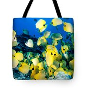 Lined Butterflyfish Tote Bag