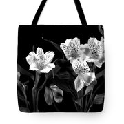 Lined Up Tote Bag by Diane Reed