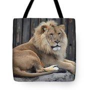 Lion 2 Tote Bag