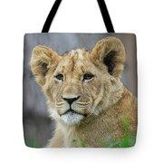 Lion Cub Close Up Tote Bag