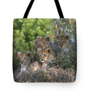 Lion Cubs Awaiting Mom Tote Bag