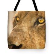 Lion Face Tote Bag