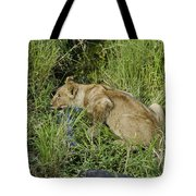 Lion In A Cool Glade Tote Bag