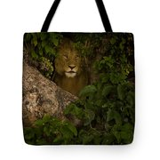 Lion In A Tree-signed Tote Bag