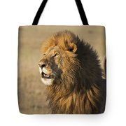 Lion Looks To Sky Tote Bag