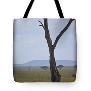 Lion Under Tree Tote Bag