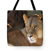 Lioness 3 Tote Bag