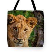 Lioness Cub Tote Bag