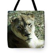 Lioness Peering Tote Bag