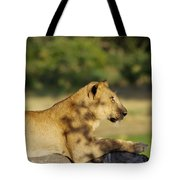Lioness Pose Tote Bag