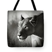 Lioness Stalking Tote Bag