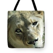 Lioness Up Close Tote Bag