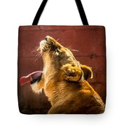 Lioness Yawn Tote Bag