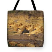 Lionesses Tote Bag