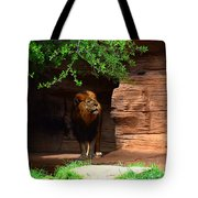 Lions And Tigers And...no Just A Lion Tote Bag
