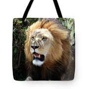 Lions Of The Masai Mara, Kenya Tote Bag