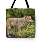 Listening Intently Closeup Tote Bag
