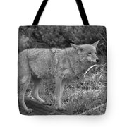 Listening Intently Closeup Black And White Tote Bag