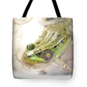 Lithobates Catesbeianus Or Rana Catesbeiana Tote Bag