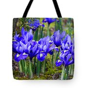 Little Baby Blue Irises Tote Bag