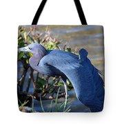 Little Blue Heron Sunbathing Tote Bag