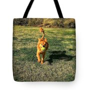 Little Lion Tote Bag