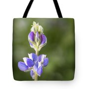 Little Lupine Tote Bag