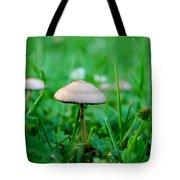 Little Mushrooms Tote Bag