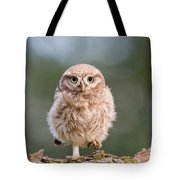 Little Owl Chick Tote Bag